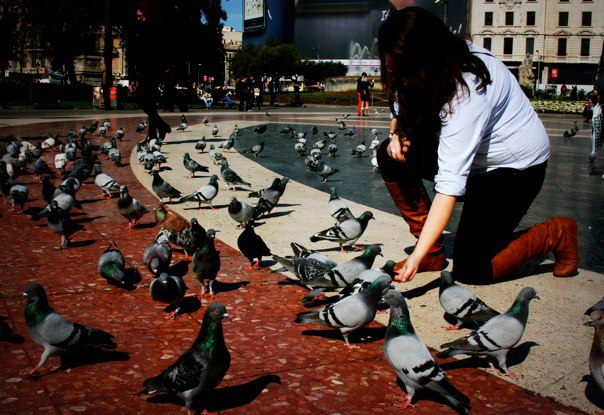 I am the pigeon whisperer