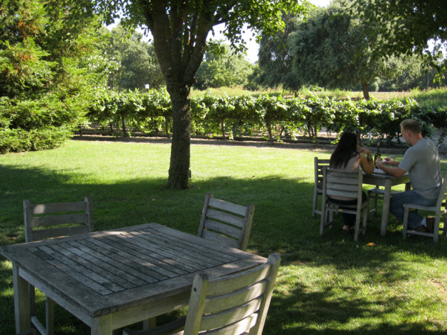 If you visit Bogle, bring a picnic lunch. You can sample wines, buy a bottle for below retail, then enjoy it out among the vines.