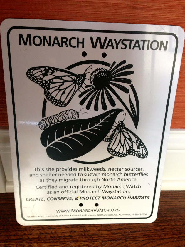 Educate passersby to the plight of the monarch and what they can do to help.