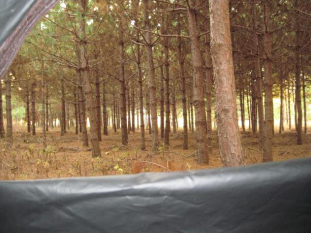 My view from the ground blind.