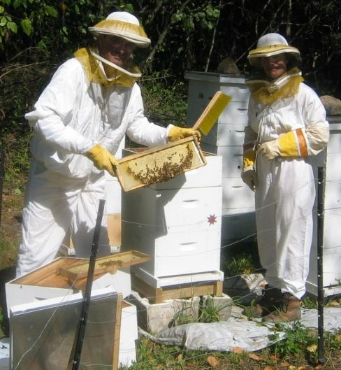 Pulling the honey from the hives