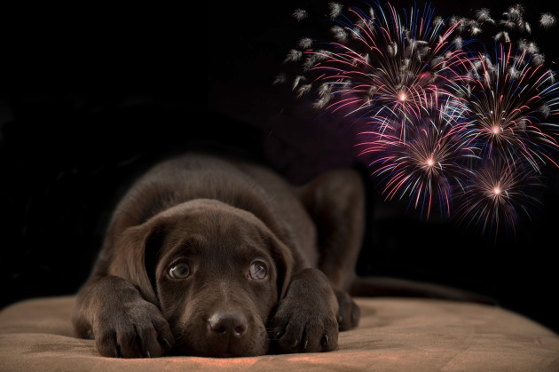 Avoid exposing your puppy to fireworks - Graphic by Logan Hinners, Pheasants Forever