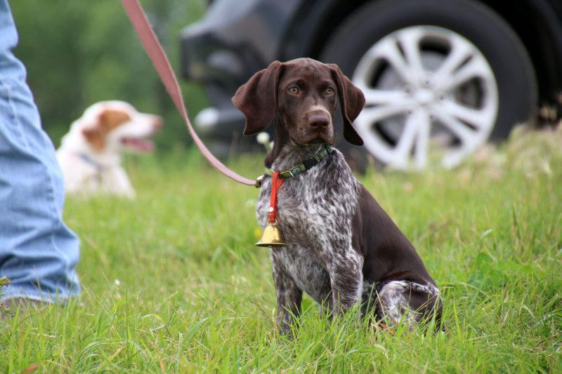 Picking the perfect name for your bird dog puppy is an important part of the process.