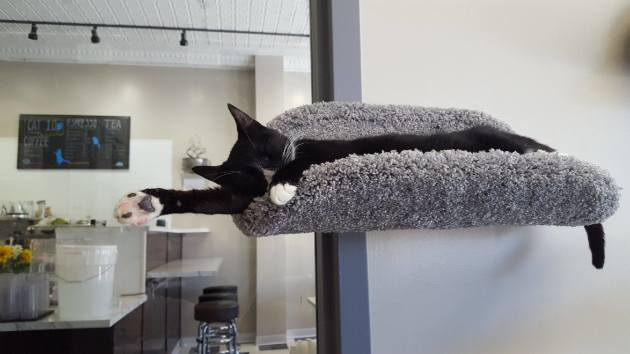 Kitties with a side of coffee: Minneapolis' first cat cafe