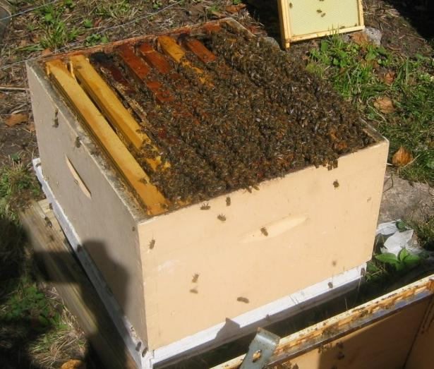 About 1/3 of bees in a hive seen in bottom box.