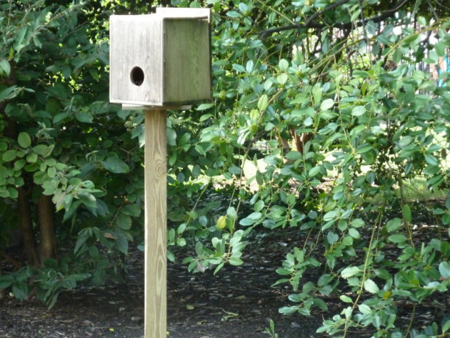 The security camera is inside the birdhouse.