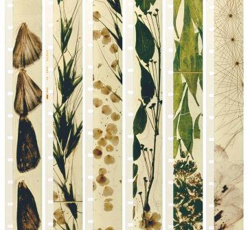 "Film strips from Stan Brakhage's ""Mothlight,"" 1969. Photo: Walker Art Center"