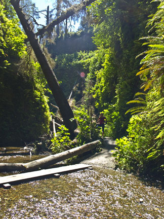 We were waiting for a dinosaur to jump out while at Fern Canyon