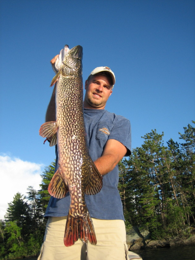 Rainy Lake pike are a dime a dozen.....Walleyes are a nickle.