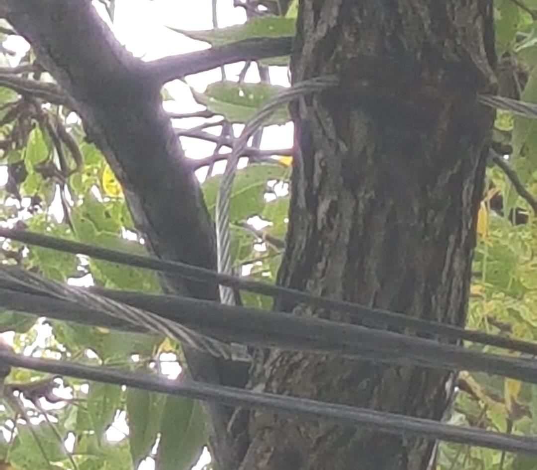 tree devours neutral