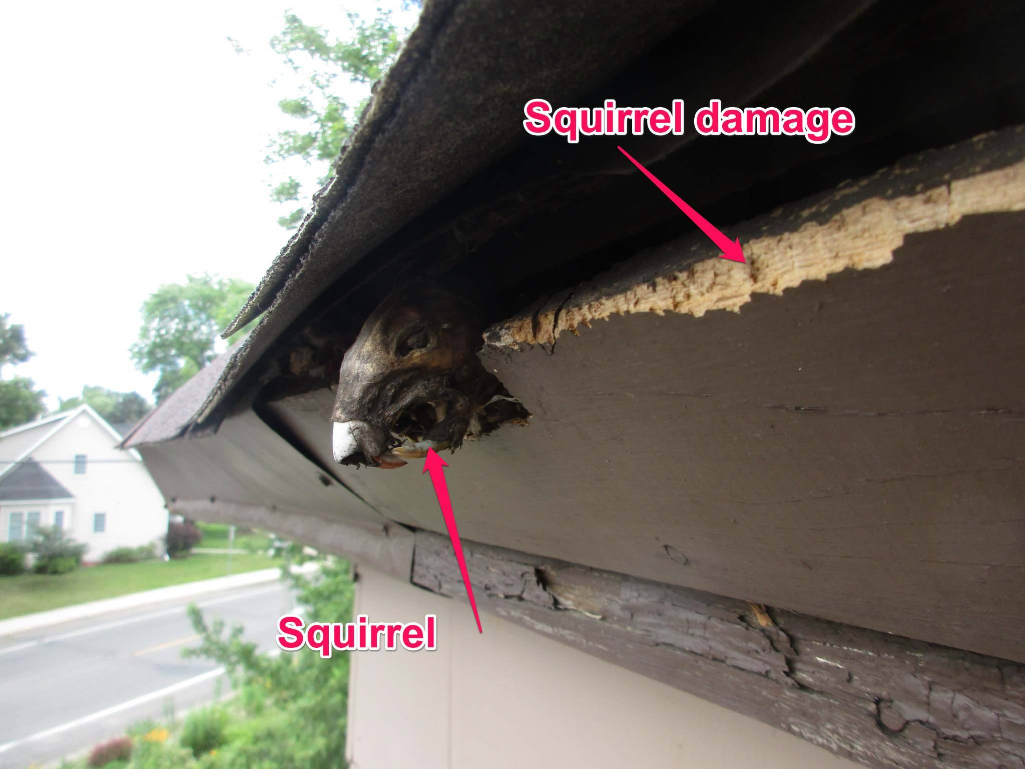 bad day for squirrel