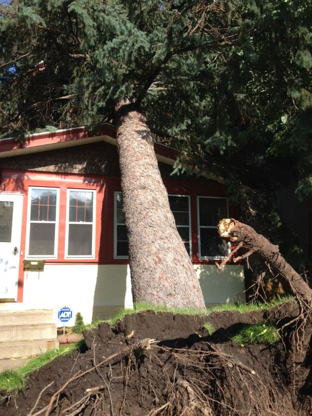 Massive pine resting on house on Lincoln St. NE. in <a href=
