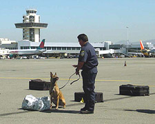 Working dog at an airport