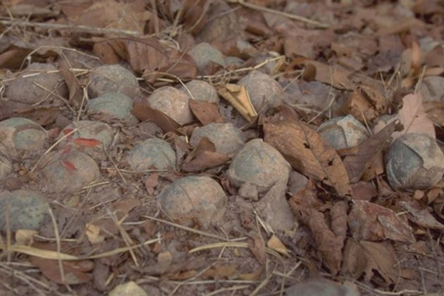 Unexploded cluster munitions in Laos (Lao National Unexploded Ordnance Programme)