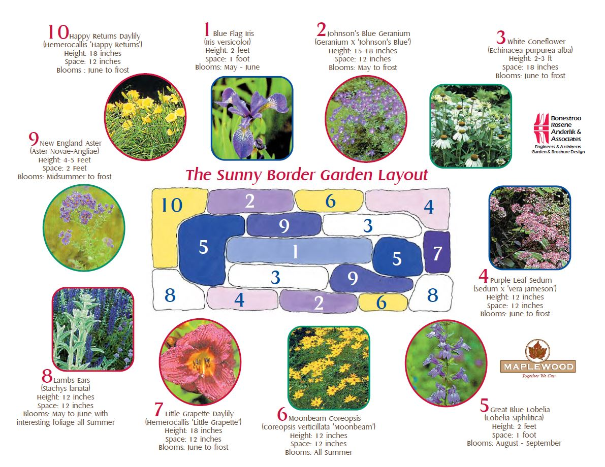 Rain garden recipes StarTribune – Rain Garden Plants