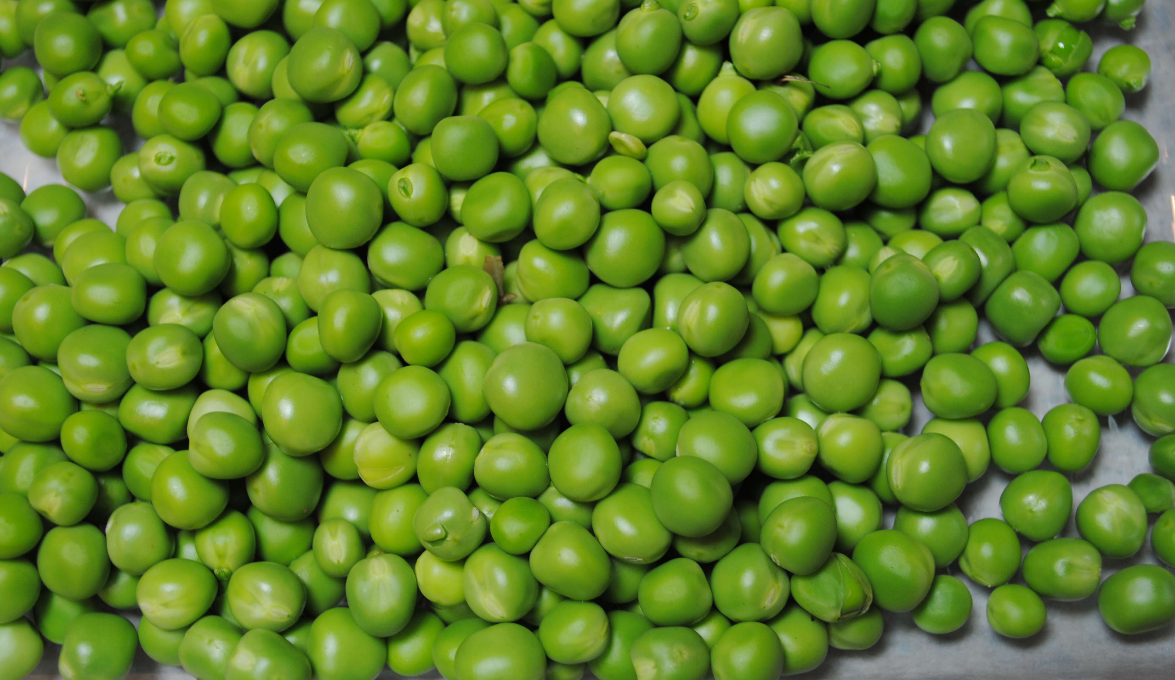 A $1.79 packet of peas will yield several-fold dollars of fresh peas.