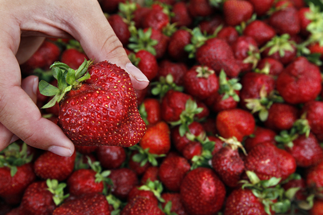 Strawberries are NOT just for the birds.