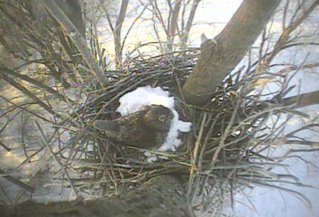 A view of our LIVE camera feed overlooking the nest.