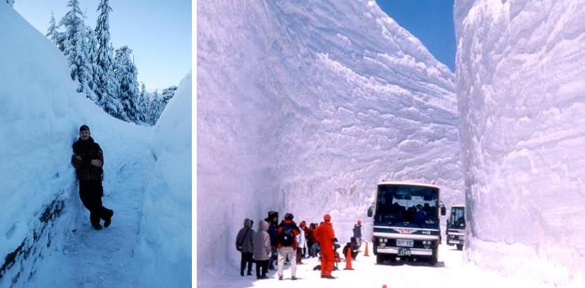 Snowfall Polarization Brown Vs White Brown Thanksgiving This Year