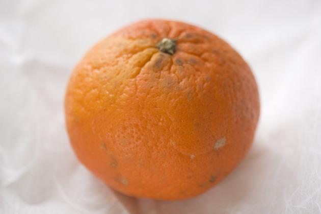 An organic tangerine