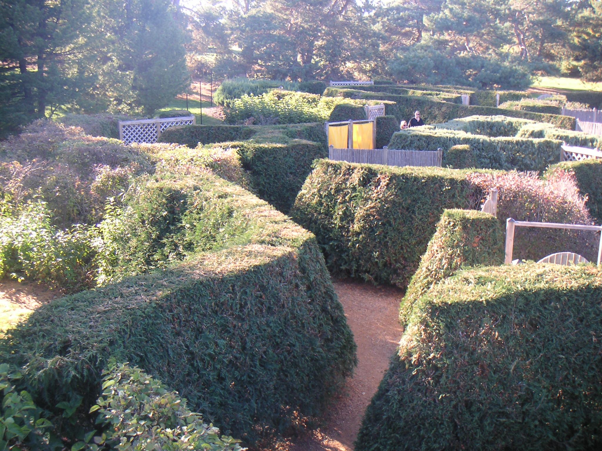 The Minnesota Landscape Arboretum's Hedge Maze