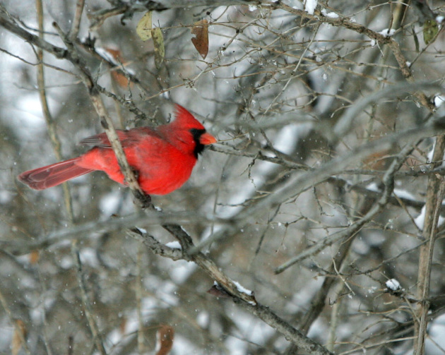 Christmas bird count takes flight