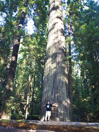 "Karl standing next to one of the ""large"" Redwoods"