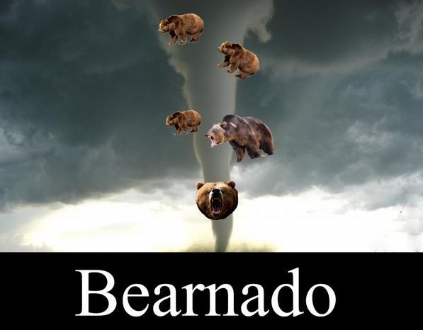 Bear-nado!