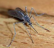 Flawless Weather Into Friday – Extended Outlook Calls For More Mosquitoes